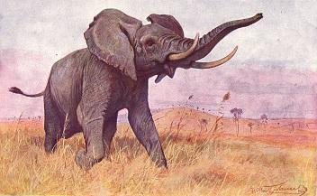 slon africký (Loxodonta africana). Obrázek převzat z Brehmova života zvířat, díl IV, svazek III, vydáno Nakladatelstvím J.Otto, společnost s r.o. v Praze, 1928.