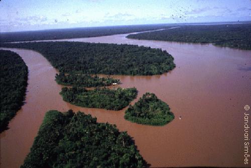 letecký snímek Amazonie (foto Janduari Simonoes)