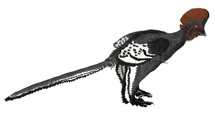 Rekonstrukce opeřeného dinosaura druhu Anchiornis huxleyi. Sahal by nám tak do půli lýtek, obr. Matt Martyniuk [CC BY 3.0 (https://creativecommons.org/licenses/by/3.0)].