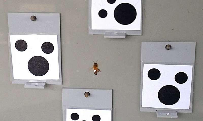 Experimentální uspořádání pokusu s včelami a nulou (foto Scarlett Howard).