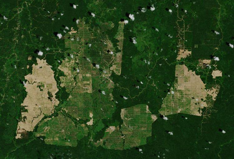 Družicový snímek části pralesa na Borneu bezohledným kácením přeměněného na plantáže pro výrobu palmové oleje, foto ESA, CC BY-SA 3.0.