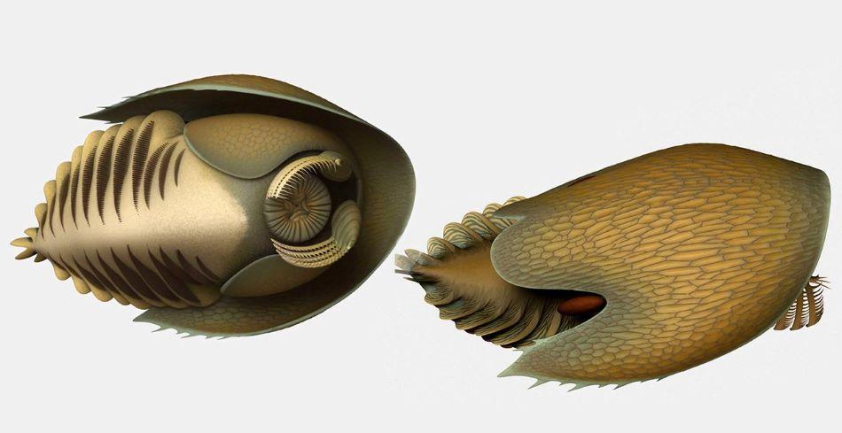 Rekonstrukce kambrického dravce Cambroraster falcatus, obr.Lars Fields/Royal Ontario Museum. Jeho fosilie pocházejí z lokality Marble Canyon v národním parku Kootenay v Britské Kolumbii.)