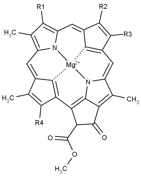 Základem fotosyntézy je molekula chlorofylu