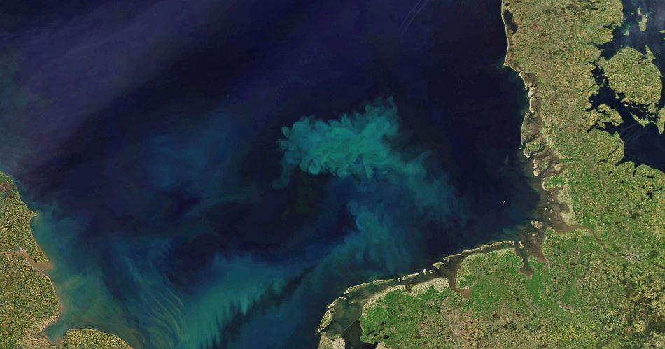 Satelitní snímek pořízený NASA ukazuje jarní nárůst mořských řas v jižní části Severního moře. Oblast 70.000 kilometrů čtvrečních vyprodukuje 10 milionů tun biomasy.