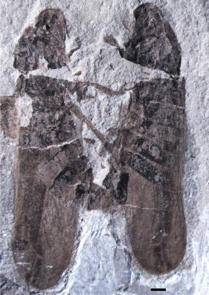 Zkamenělý kopulující hmyz, obr.PLoS ONE 8(11): e78188. doi:10.1371/journal.pone.0078188