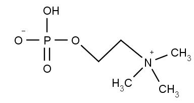 struktura fosforylcholinu (fosfocholinu)