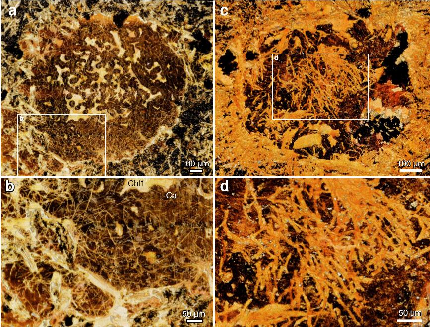 Mikroskopické snímky nalezených fosilií hub (Bengtson, S. et al., Fungus-like mycelial fossils in 2.4-billion-year-old vesicular basalt. Nat. Ecol. Evol. 1, 0141, 2017).