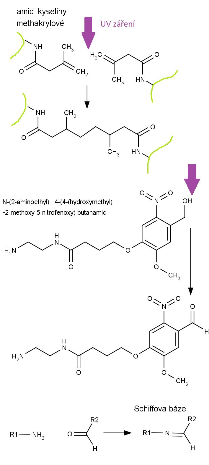 Ultrafialovým světlem vyvolané chemické reakce při polymerizaci gelu pro uzavření ran.
