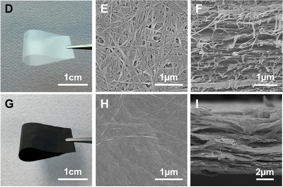 Membrána z čisté nanocelulózy (D), její povrch (E) a řez (F) na snímku rastrovací elektronového mikroskopu. Na obrázích G, H, a I vidíme ve stejném pořadí totéž, ale pro nanocelulózovou membránu s grafenem (upraveno podle Qisheng Jiang et al., Photothermally Active Reduced Graphene Oxide/Bacterial Nanocellulose Composites as Biofouling-Resistant Ultrafiltration Membranes, Environ. Sci. Technol., 2019, 53 (1), pp 412–421).