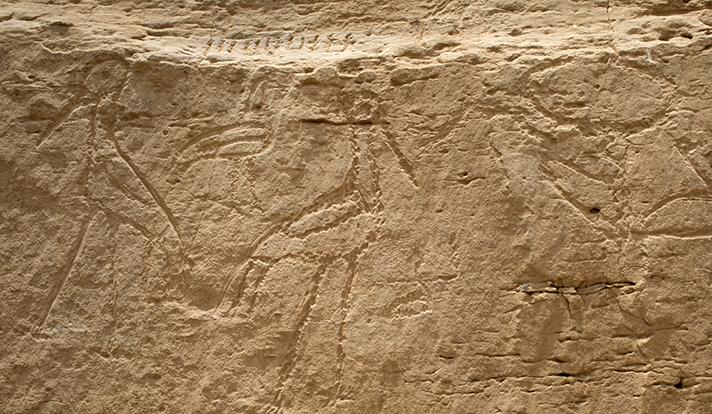 Egyptské hieroglyfy vyryté do skály v Elkabu, výška 50 cm (foto Yale University).