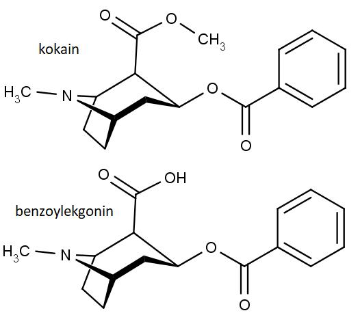 Nahoře chemická struktura molekuly kokainu, dole benzoylekgoninu.