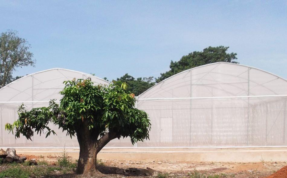 Komárosféra (angl.MosquitoSphere), stan z moskytiéry v Burkině Faso, kde probíhaly pokusy s hubením komárů Anopheles pomocí geneticky modifikované houby Metarhizium pingshaense. Vnitřek napodoboval vesnické osídlení, foto  Etienne Bilgo.