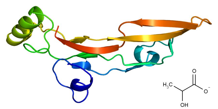 Vpravo dole chemická struktura laktátu, dole terciární struktura bílkoviny TGF-beta2, Emw, CC BY-SA 3.0, https://creativecommons.org/licenses/by-sa/3.0.
