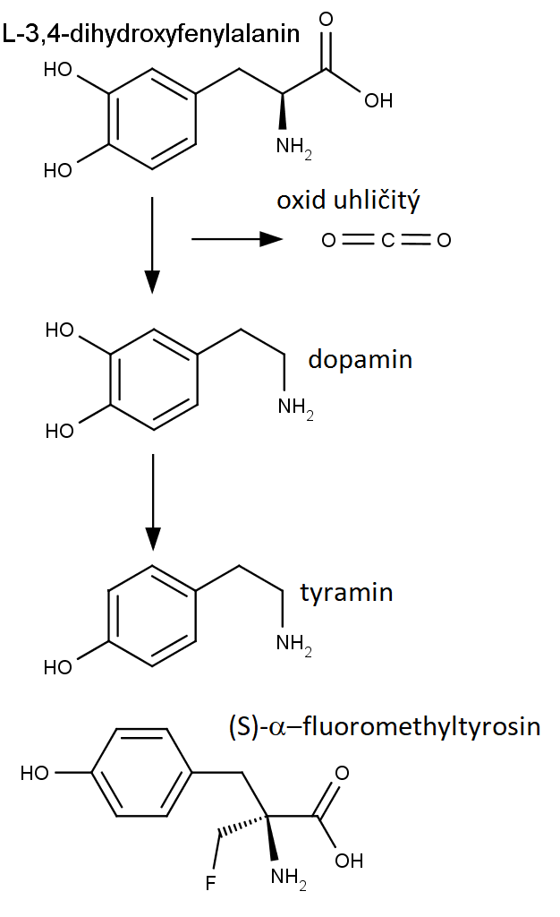 Přeměna L-3,4-dihydroxyfenylalaninu dekarboxalcí na dopamin a na tyramin. Dole chemická struktura (S)-α-fluoromethyltyrosinu.