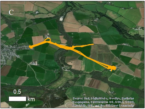 Záznam pohybu Maxe, kastrovaného kocoura, jedné ze tří koček ze sledovaného vzorku, jejichž teritorium přesáhlo kilometr čtvereční. Pohyboval se pravidelně mezi britskými vesnicemi St. Newlyn East a Trevilson. Obr. Kays, R., et al., (2020), The small home ranges and large local ecological impacts of pet cats. Anim Conserv. doi:10.1111/acv.12563.