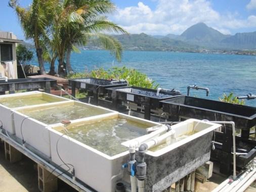 Zařízení pro výzkum korálů v Coral Reef Ecology Laboratory, foto Coral Reef Ecology Laboratory.