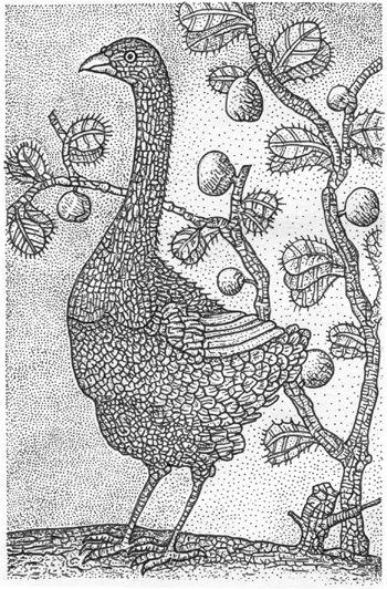 Dodo samotář z ostrova Rodriguez podle F.Leguata z r.1708 (obr Živa).