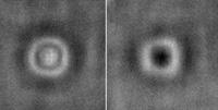 Vlevo snímek mikročočky bez vazby, vpravo se sloučeninou (antigenem) navázaným na povrchové protilátky. Změna tvaru je zjevná.