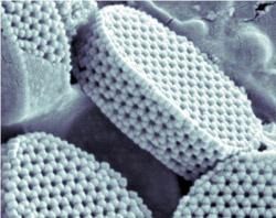 Schránky řasy Calyptrolithophora papillifera