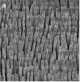 Nanoválečky z deuterovaného polyethylenu pro laserovou jadernou fúzi o průměru 200 nm a výšce 5 mikrometrů na snímku rastrovací elektronového mikroskopu (A.Curtis et al., Micro-scale fusion in dense relativistic nanowire array plasmas, Nature Communications, volume 9, Article number: 1077 (2018) doi:10.1038/s41467-018-03445-z).