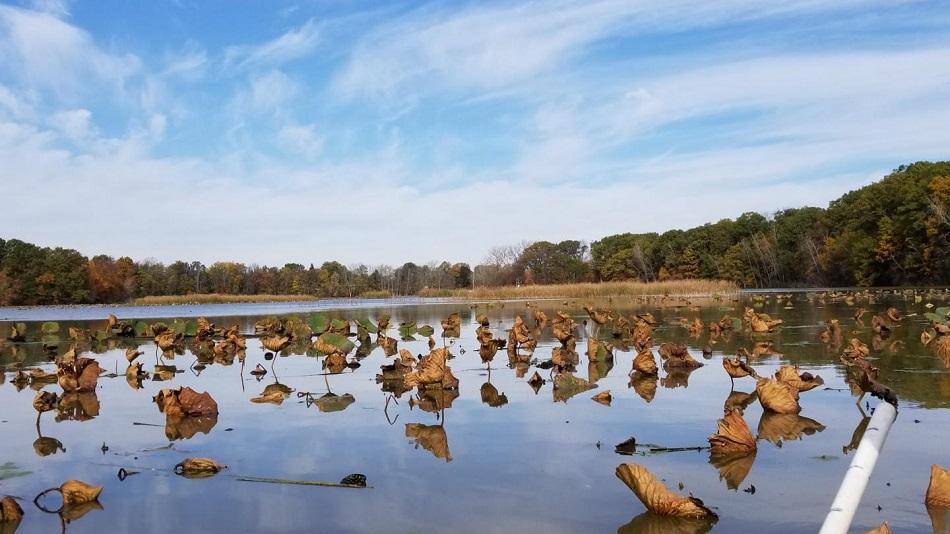 Old Woman Creek na břehu Erijského jezera, místo objevu bakterií Candidatus Methanothrix paradoxum, foto Jordan Angle/The Ohio State University.
