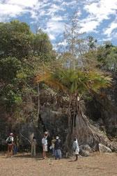odumírající nově objevená palma
