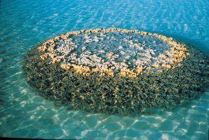 Na obrázku vidíme miniaturní atol vytvořený dírkovníkem válcovitým ve Velkém bradlovém útesu (foto Australian Institute of Marine Science CC BY-NC 3.0).