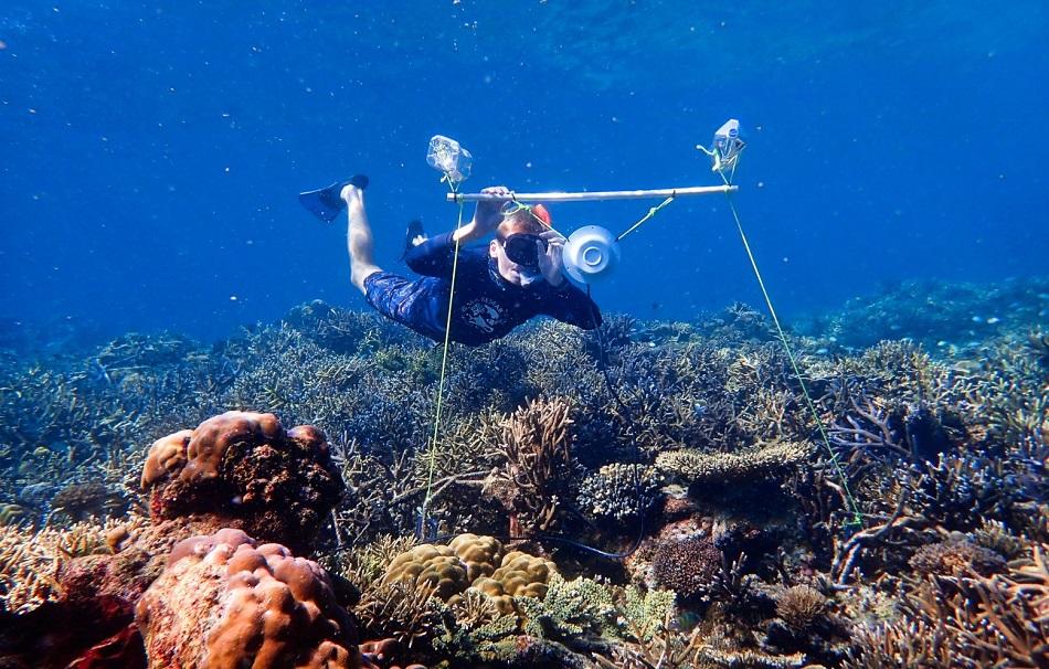 Instalace podvodního reproduktoru na korálový útes, foto Harry Harding, University of Bristol.