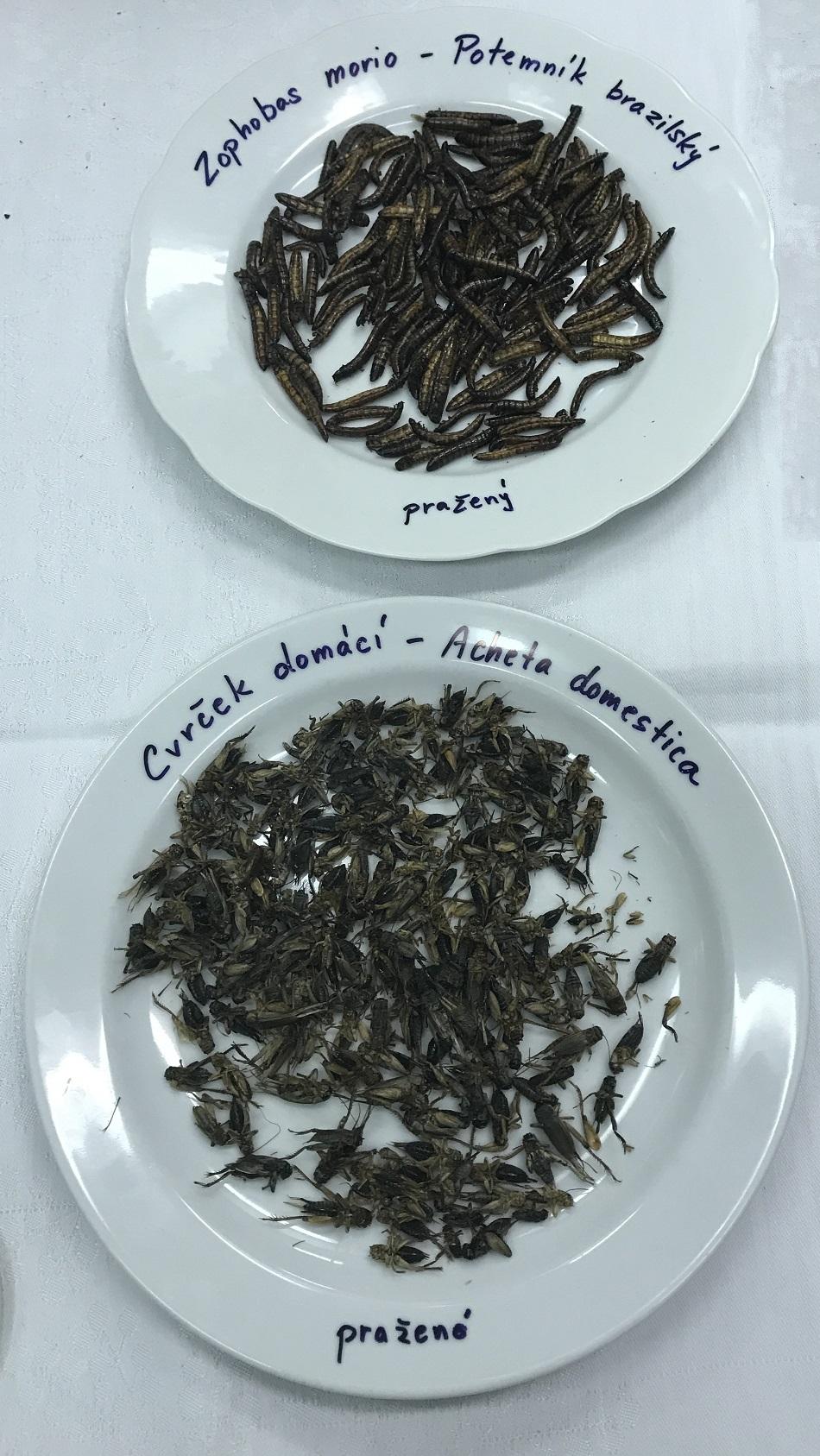 Nahoře pražené larvy potemníka brazilského (Zophobas morio) těsně před zakuklením, dole pražení cvrčci domácí (Acheta domestica).