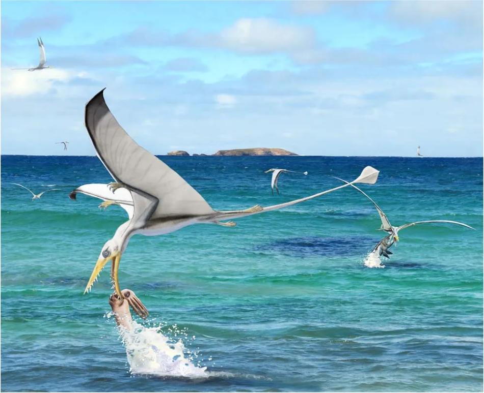 Ptakoještěři Rhamphorhynchus muensteri loví hlavonožce Plesioteuthis subovata na hladině jurského moře, kresba a fotografie v pozadí CK a Beat Scheffold za použití modelu BS, CC BY 4.0, https://creativecommons.org/licenses/by/4.0/, Hoffmann, R., Bestwick, J., Berndt, G. et al. Pterosaurs ate soft-bodied cephalopods (Coleoidea), Sci Rep 10, 1230 (2020).