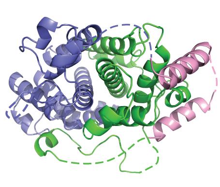 Struktura molekuly lidského sestrinu,  obr. Laboratory of Structure & Epigenetics, Dept. of Biological Chemistry, University of Michigan.