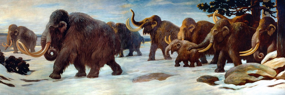 Stádo mamutů srstnatých v oblasti dnešní řeky Sommy ve Francii, umělecká rekonstrukce, public domain.