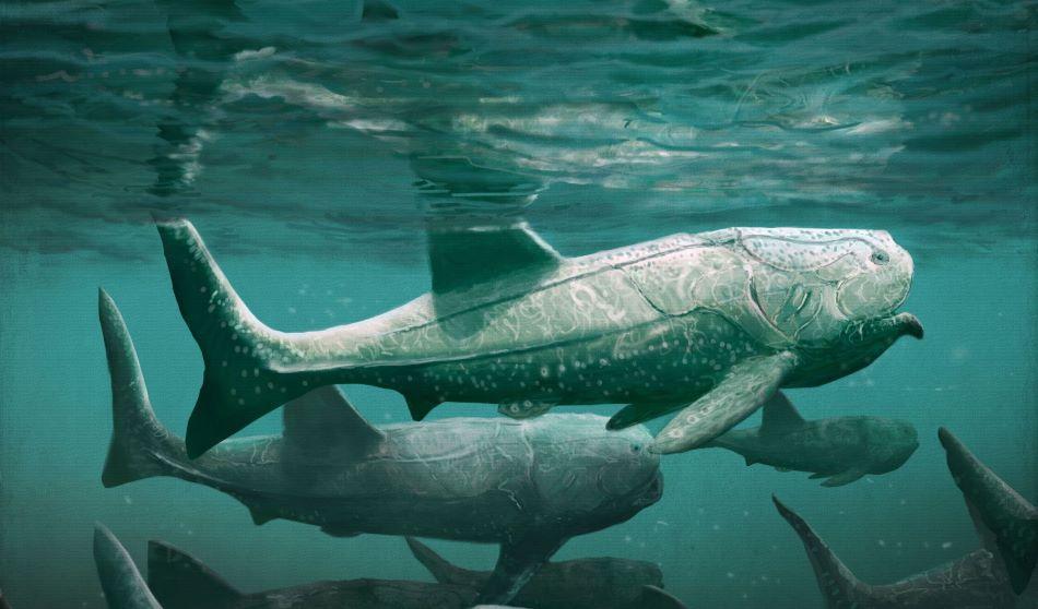 Takhle nějak vypadal Titanichthys při filtrování planktonu, což musel dělat skoro pořád, obr. Mark Witton.