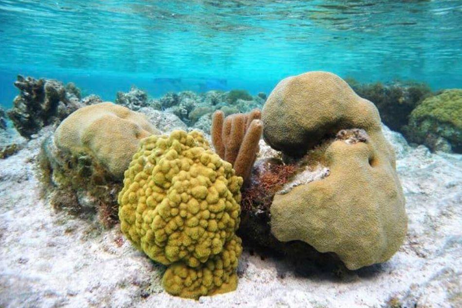 Korálové útesy u skupin ostrovů Turks a Caicos  se zotavují nečekaně rychle, foto Abby Knipp.