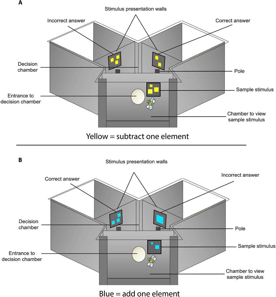 Uspořádání experimentu pro testování výpočetních schopností včel, S.R.Howard et al., Numerical cognition in honeybees enables addition and subtraction, Science Advances  06 Feb 2019: Vol. 5, no. 2, eaav0961, CC BY-NC 4.0, https://creativecommons.org/licenses/by-nc/4.0/.